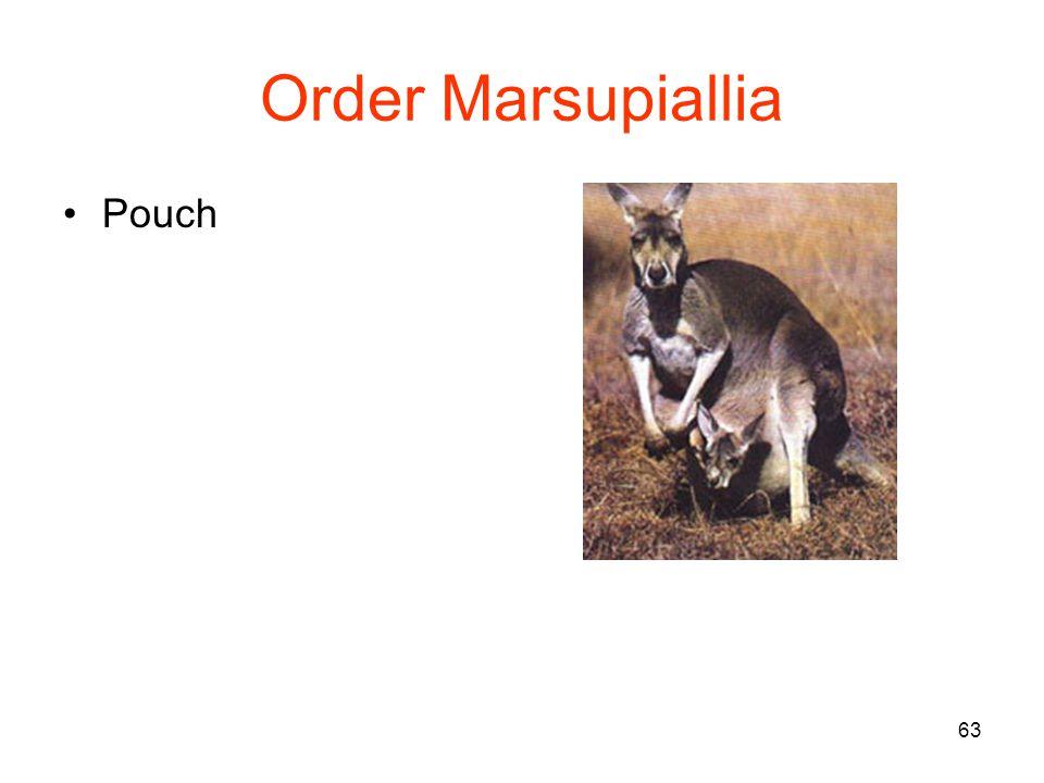 63 Order Marsupiallia Pouch