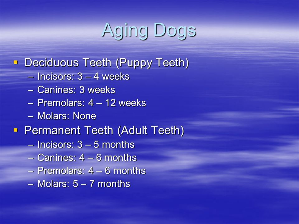 Aging Dogs Deciduous Teeth (Puppy Teeth) Deciduous Teeth (Puppy Teeth) –Incisors: 3 – 4 weeks –Canines: 3 weeks –Premolars: 4 – 12 weeks –Molars: None