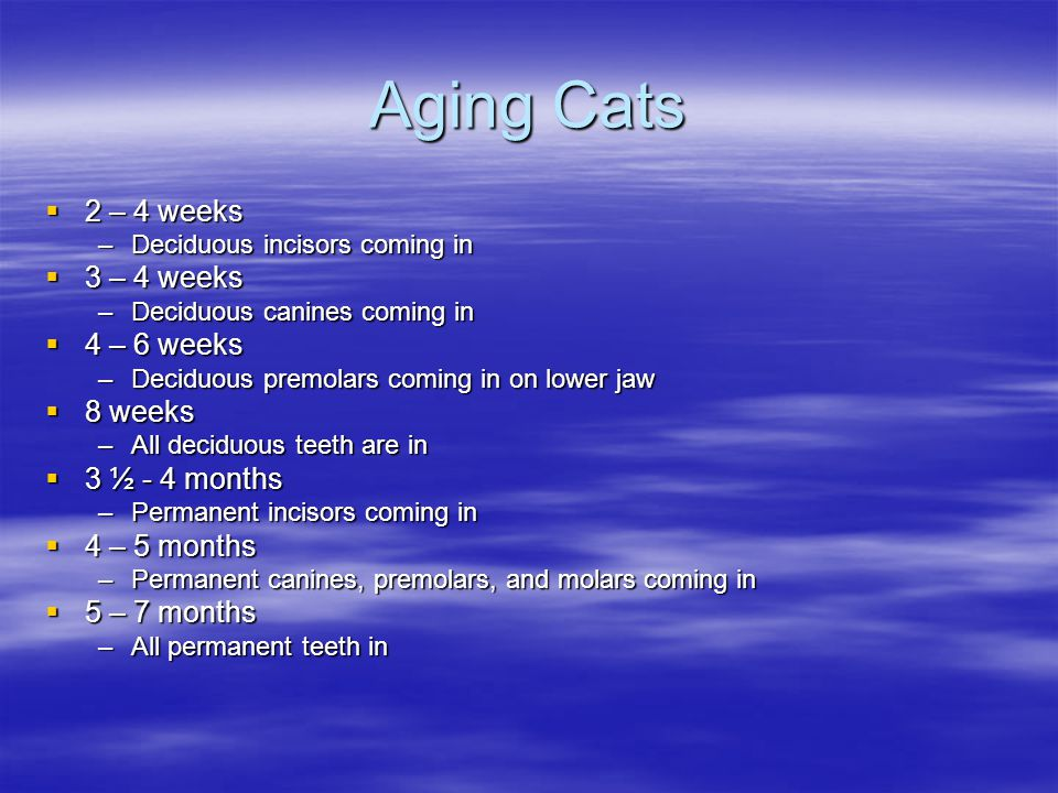 Aging Cats 2 – 4 weeks 2 – 4 weeks –Deciduous incisors coming in 3 – 4 weeks 3 – 4 weeks –Deciduous canines coming in 4 – 6 weeks 4 – 6 weeks –Deciduo