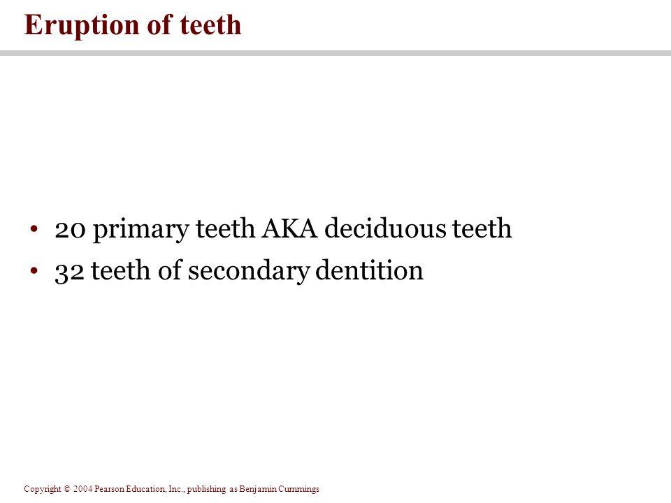 Copyright © 2004 Pearson Education, Inc., publishing as Benjamin Cummings 20 primary teeth AKA deciduous teeth 32 teeth of secondary dentition Eruptio