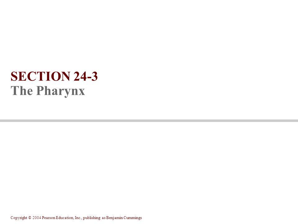 Copyright © 2004 Pearson Education, Inc., publishing as Benjamin Cummings SECTION 24-3 The Pharynx
