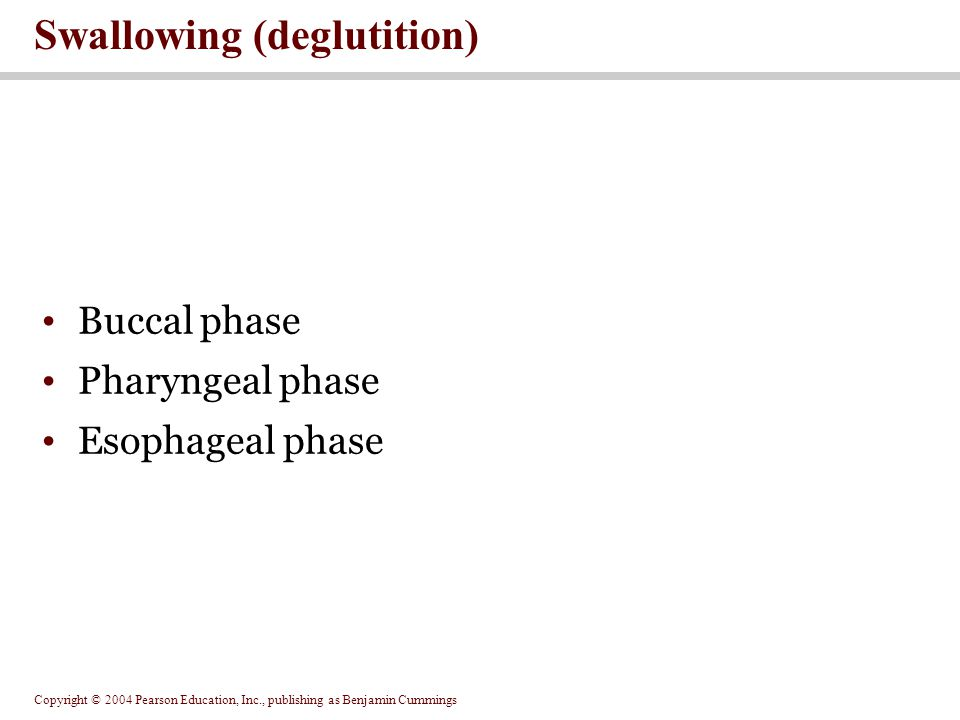 Copyright © 2004 Pearson Education, Inc., publishing as Benjamin Cummings Buccal phase Pharyngeal phase Esophageal phase Swallowing (deglutition)
