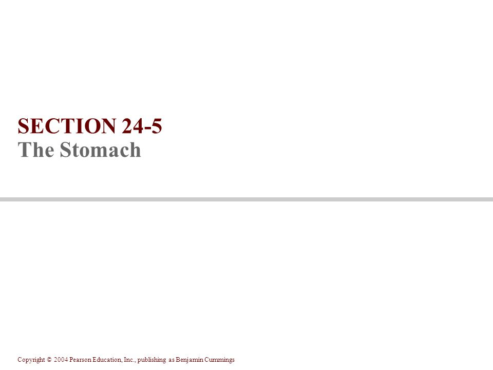Copyright © 2004 Pearson Education, Inc., publishing as Benjamin Cummings SECTION 24-5 The Stomach