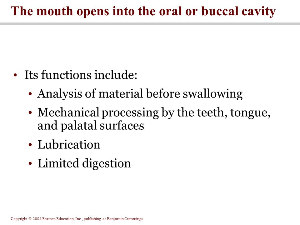 Copyright © 2004 Pearson Education, Inc., publishing as Benjamin Cummings Lined by oral mucosa Roof of cavity = hard and soft palates Floor of cavity = tongue Uvula guards opening to pharynx Oral cavity