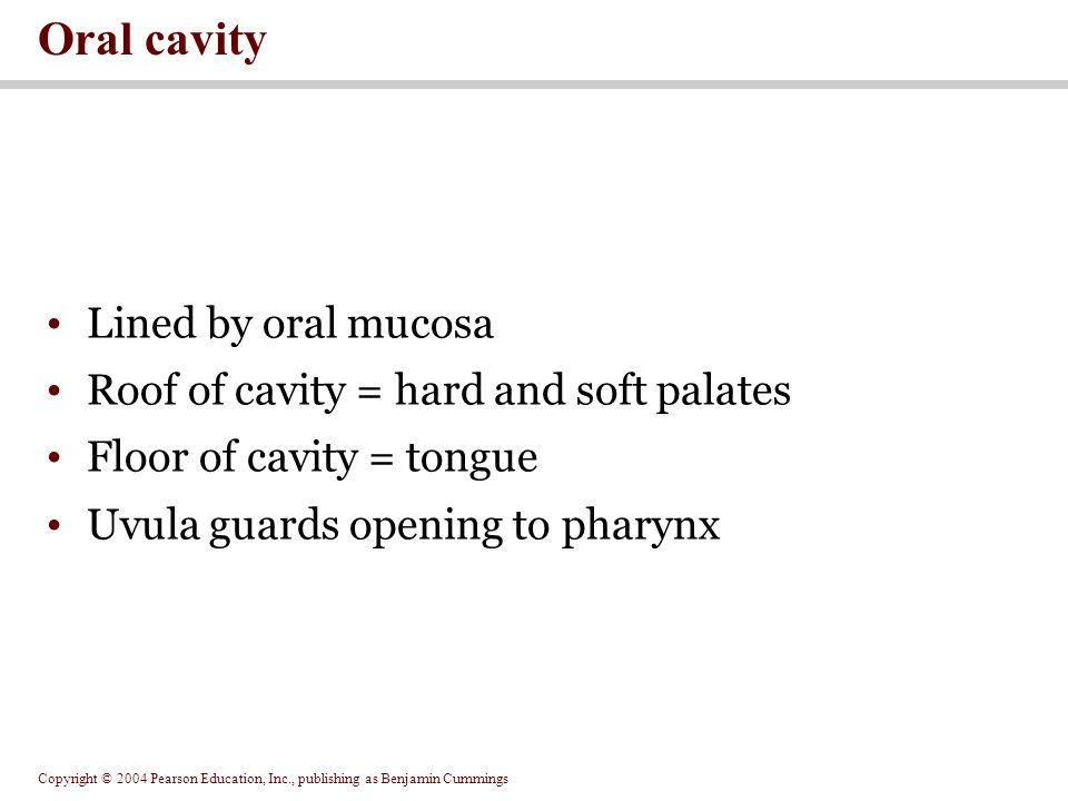 Copyright © 2004 Pearson Education, Inc., publishing as Benjamin Cummings Figure 24.6 The Oral Cavity Figure 24.6a, b