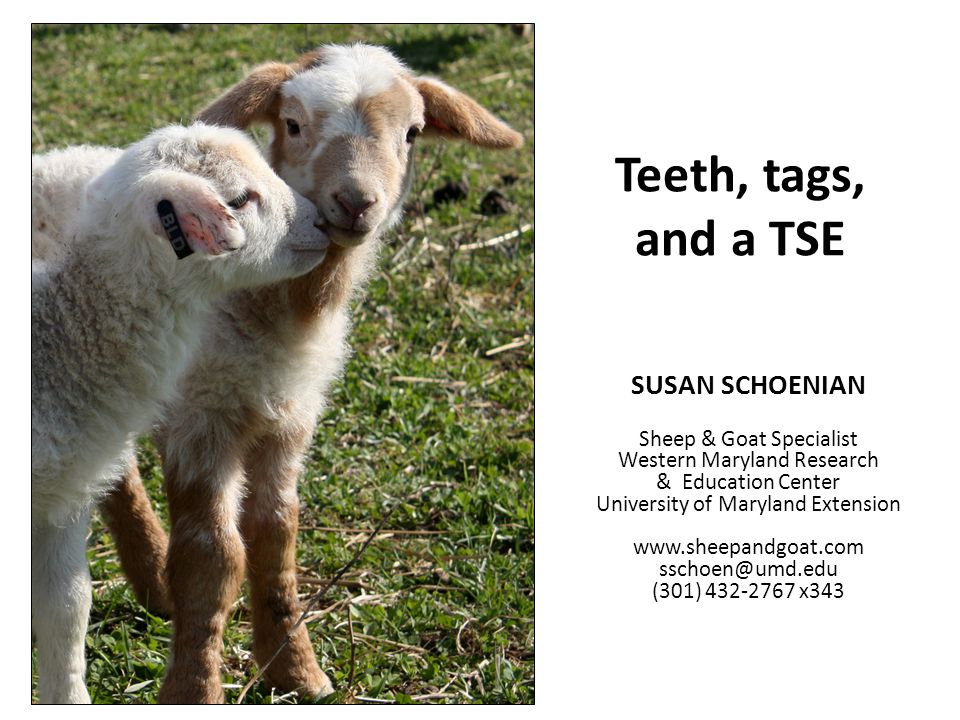 Todays topics Teeth – Mouthing sheep and goats to estimate age – Mouthing sheep and goats to determine soundness Tags – Methods of identifying sheep and goats – Ear tagging basics TSE – Scrapie in sheep and goats – Tagging requirements
