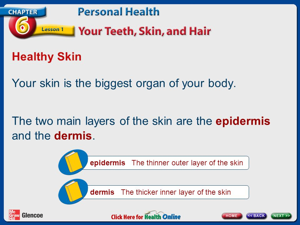 Healthy Skin Your skin is the biggest organ of your body.