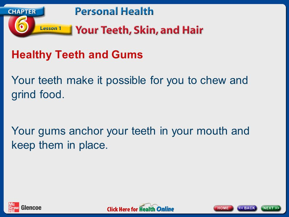 Healthy Teeth and Gums Your teeth make it possible for you to chew and grind food. Your gums anchor your teeth in your mouth and keep them in place.