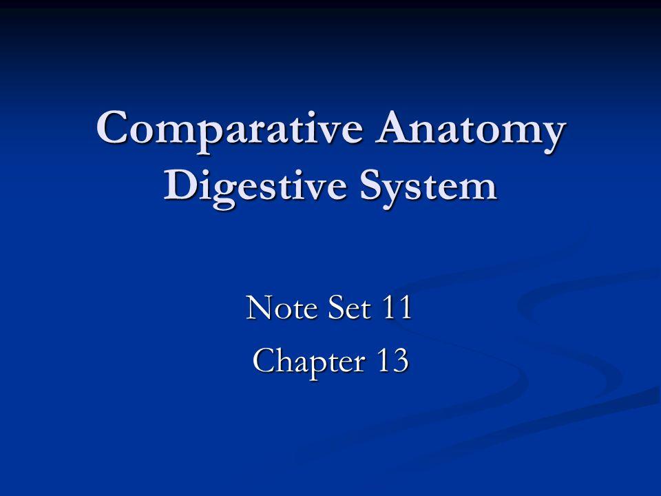 Comparative Anatomy Digestive System Note Set 11 Chapter 13