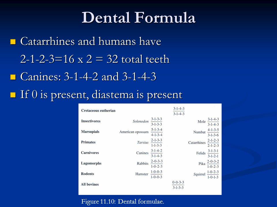 Dental Formula Figure 11.10: Dental formulae.