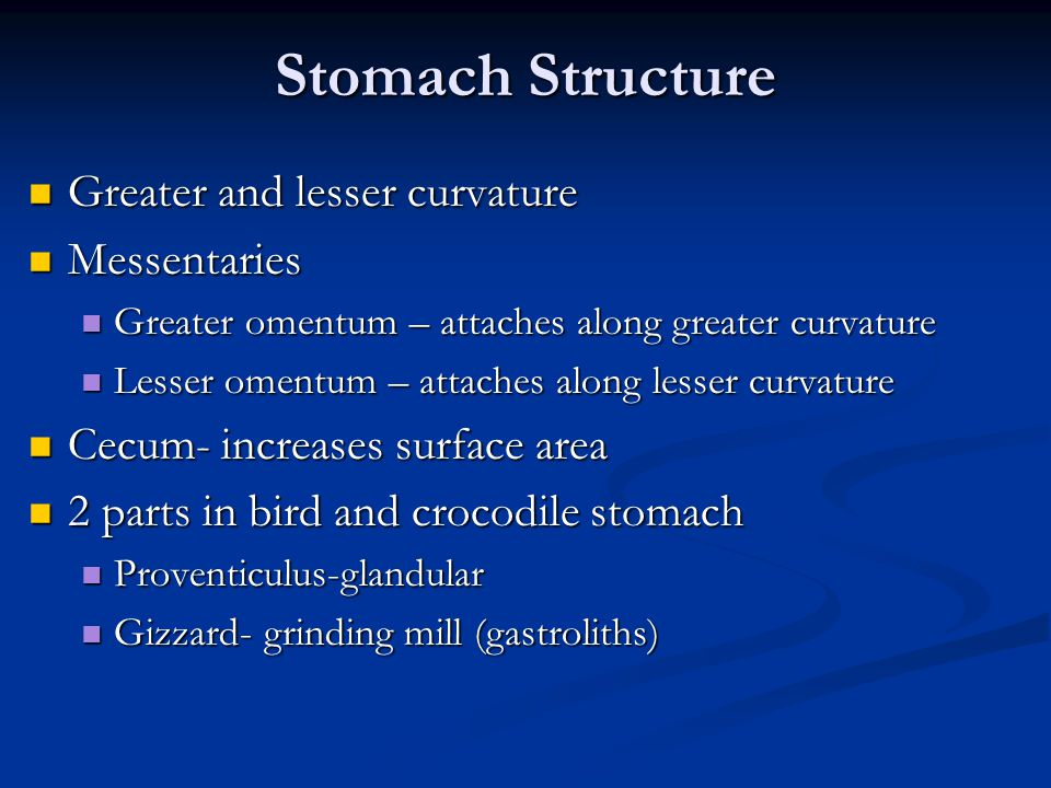 Stomach Structure Greater and lesser curvature Greater and lesser curvature Messentaries Messentaries Greater omentum – attaches along greater curvature Greater omentum – attaches along greater curvature Lesser omentum – attaches along lesser curvature Lesser omentum – attaches along lesser curvature Cecum- increases surface area Cecum- increases surface area 2 parts in bird and crocodile stomach 2 parts in bird and crocodile stomach Proventiculus-glandular Proventiculus-glandular Gizzard- grinding mill (gastroliths) Gizzard- grinding mill (gastroliths)