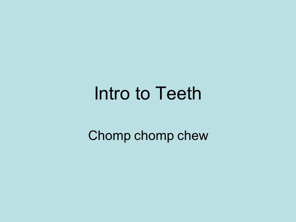 Intro to Teeth Chomp chomp chew