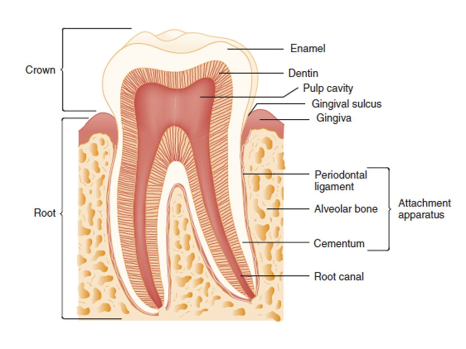 Dental crown fractures Ellis I - enamel only, painless White fracture surface Ellis II - enamel and dentin, painful Yellow fracture surface Ellis III (complicated) - pulp involved, painful Red fracture surface