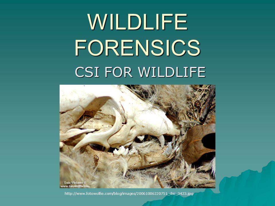 WILDLIFE FORENSICS CSI FOR WILDLIFE http://www.fotowolfie.com/blog/images/20061006220751_dsc_3423.jpg