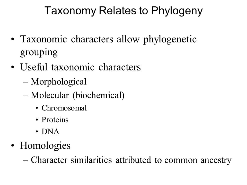 Taxonomy Relates to Phylogeny Taxonomic characters allow phylogenetic grouping Useful taxonomic characters –Morphological –Molecular (biochemical) Chromosomal Proteins DNA Homologies –Character similarities attributed to common ancestry