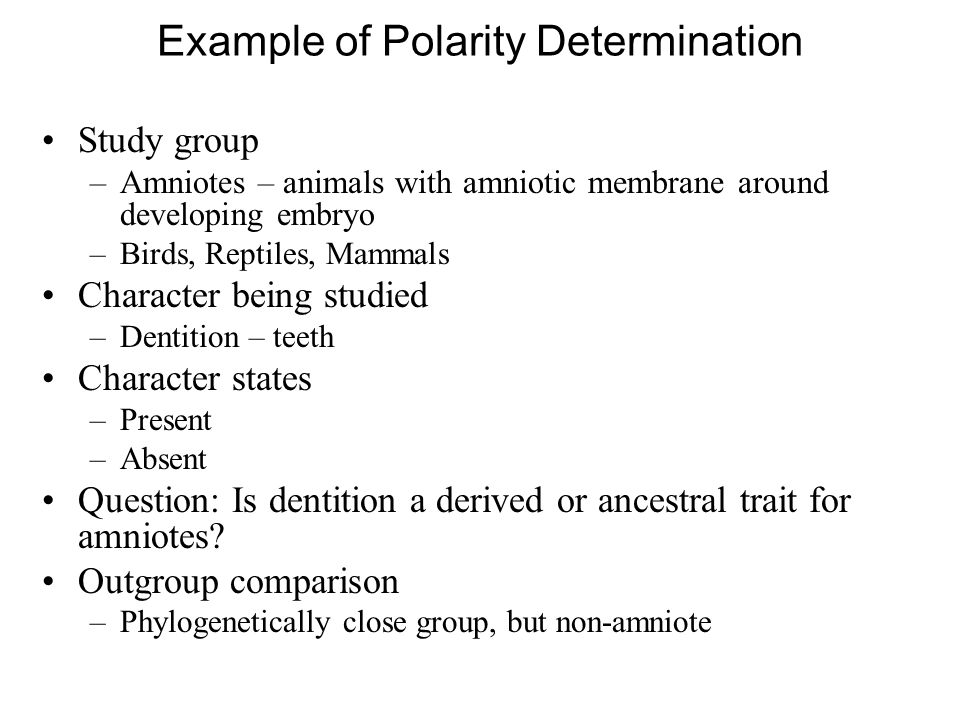 Example of Polarity Determination Study group –Amniotes – animals with amniotic membrane around developing embryo –Birds, Reptiles, Mammals Character being studied –Dentition – teeth Character states –Present –Absent Question: Is dentition a derived or ancestral trait for amniotes.