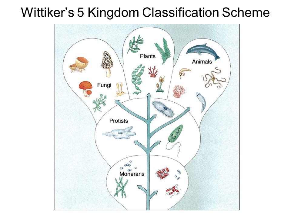Wittikers 5 Kingdom Classification Scheme
