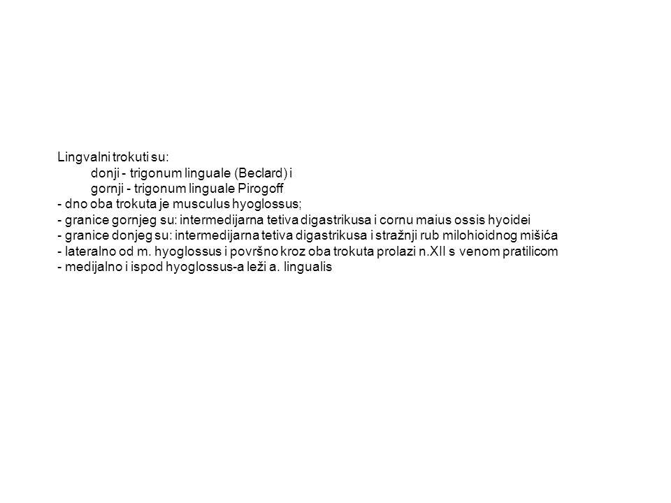 Lingvalni trokuti su: donji - trigonum linguale (Beclard) i gornji - trigonum linguale Pirogoff - dno oba trokuta je musculus hyoglossus; - granice go
