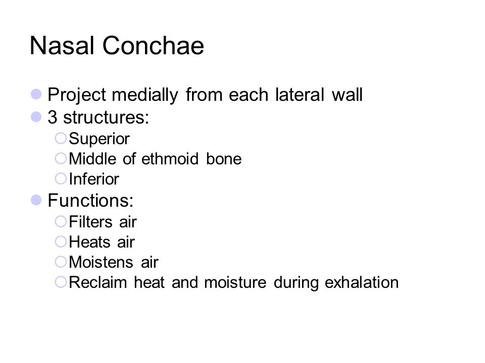 Nasal Conchae Project medially from each lateral wall 3 structures: Superior Middle of ethmoid bone Inferior Functions: Filters air Heats air Moistens
