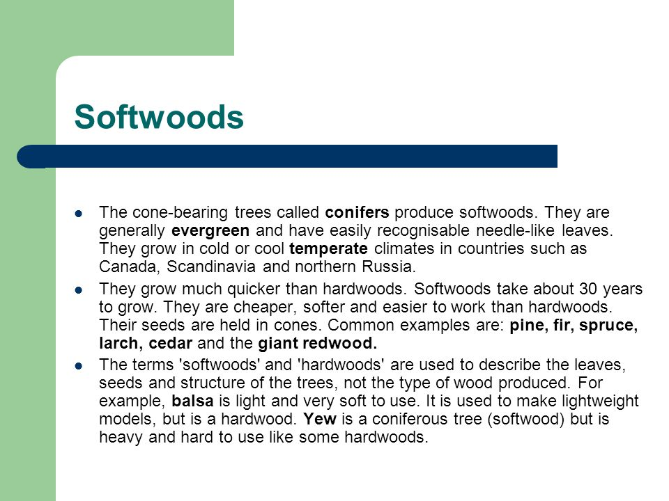 Softwoods The cone-bearing trees called conifers produce softwoods. They are generally evergreen and have easily recognisable needle-like leaves. They