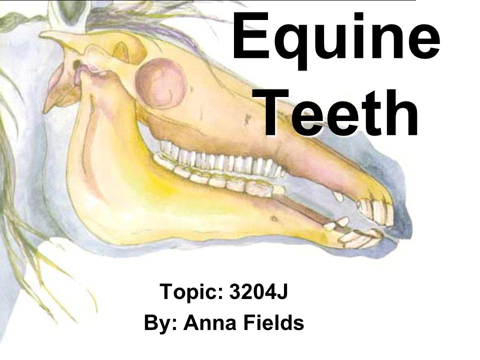 Terminology Mandible: lower jaw bone Maxilla: upper jaw bone Caudal: towards the back Rostral: towards the front Table: Grinding surface of teeth http://www.lovehealth.co.uk/sale/skull.htm