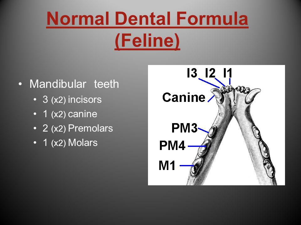 Normal Dental Formula (Feline) Mandibular teeth 3 (x2) incisors 1 (x2) canine 2 (x2) Premolars 1 (x2) Molars