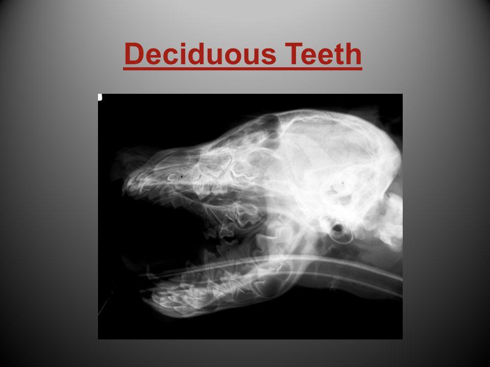 Deciduous Teeth