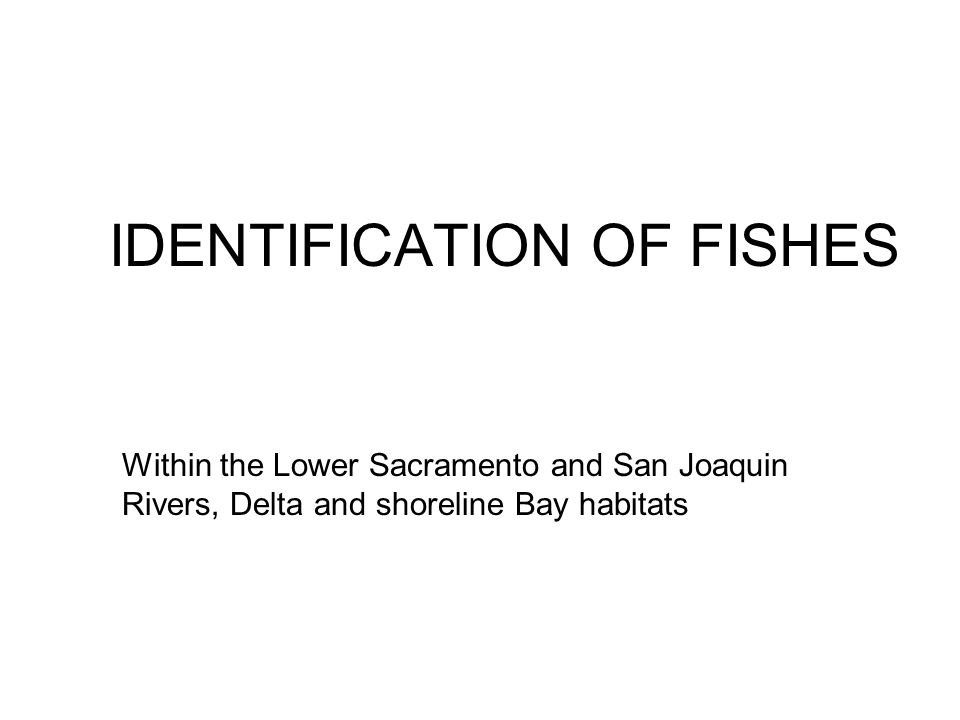 Within the Lower Sacramento and San Joaquin Rivers, Delta and shoreline Bay habitats IDENTIFICATION OF FISHES