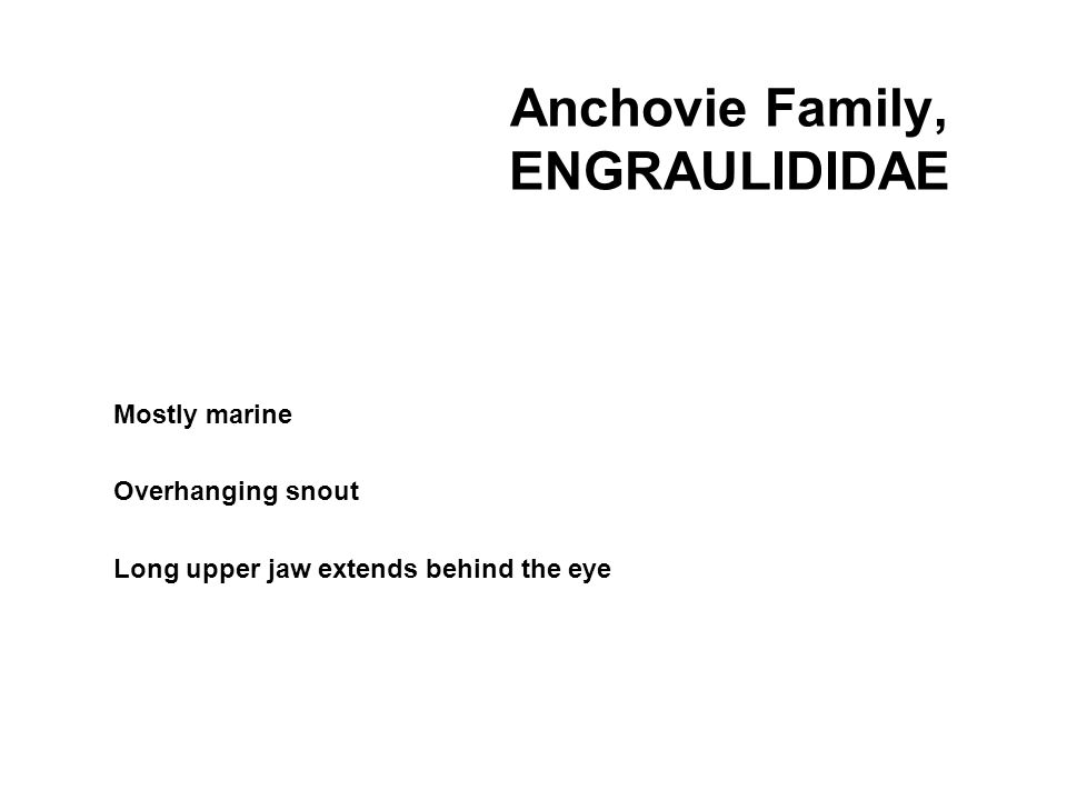 Anchovie Family, ENGRAULIDIDAE Mostly marine Overhanging snout Long upper jaw extends behind the eye