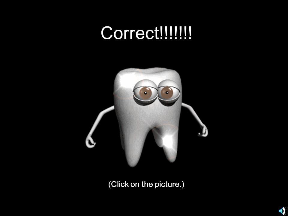 Inside the mouth molars incisors Bicuspids or premolars Cuspids