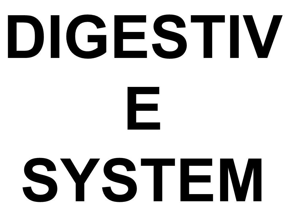 DIGESTIV E SYSTEM