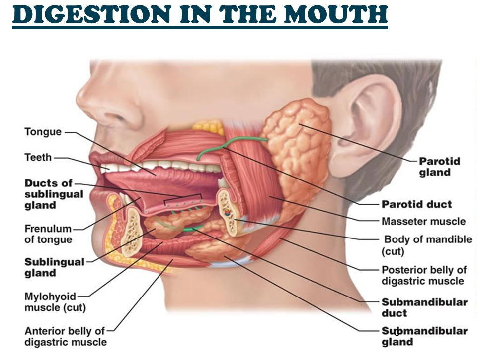 4 Physical breakdown Teeth, palate & tongue Chemical digestion Saliva & amylases