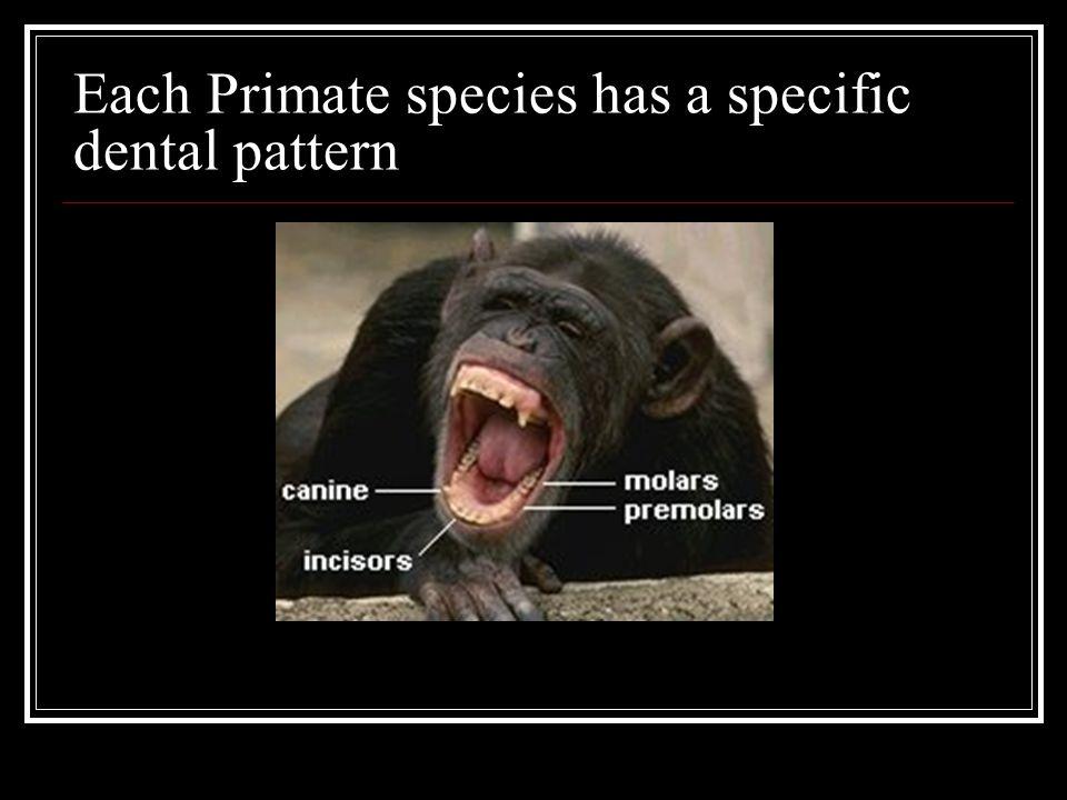 Each Primate species has a specific dental pattern