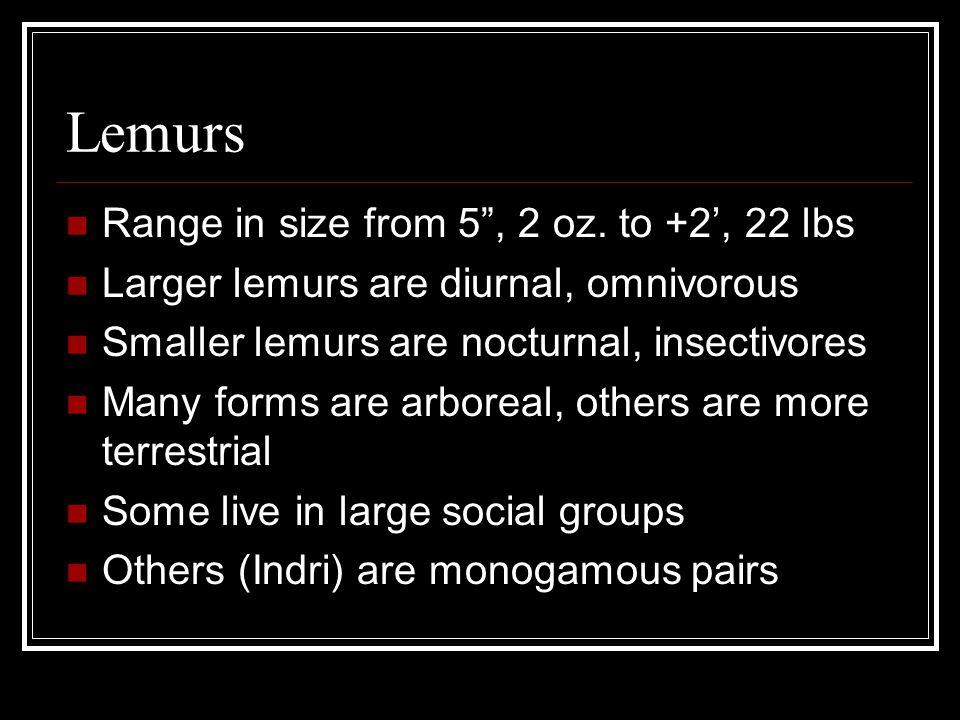 Lemurs Range in size from 5, 2 oz.