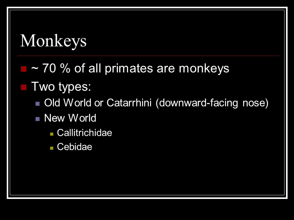 Monkeys ~ 70 % of all primates are monkeys Two types: Old World or Catarrhini (downward-facing nose) New World Callitrichidae Cebidae