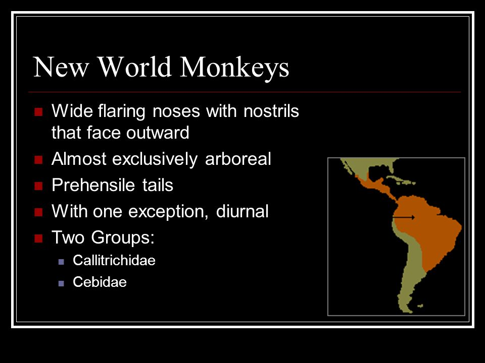 New World Monkeys Wide flaring noses with nostrils that face outward Almost exclusively arboreal Prehensile tails With one exception, diurnal Two Grou