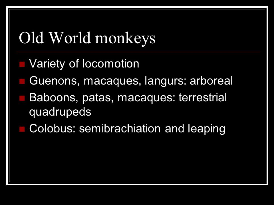 Old World monkeys Variety of locomotion Guenons, macaques, langurs: arboreal Baboons, patas, macaques: terrestrial quadrupeds Colobus: semibrachiation