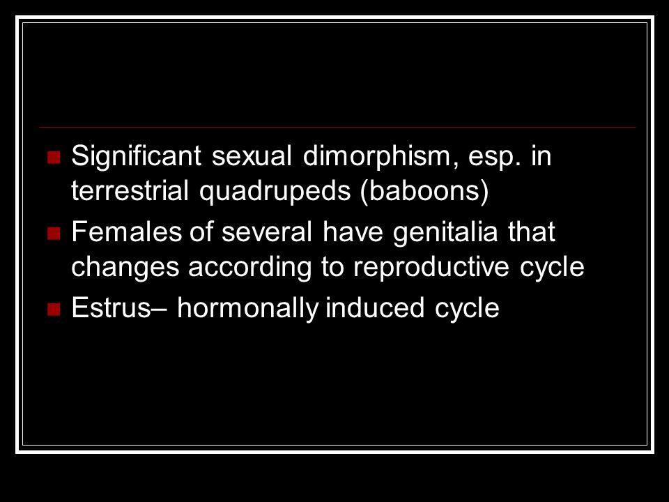 Significant sexual dimorphism, esp.
