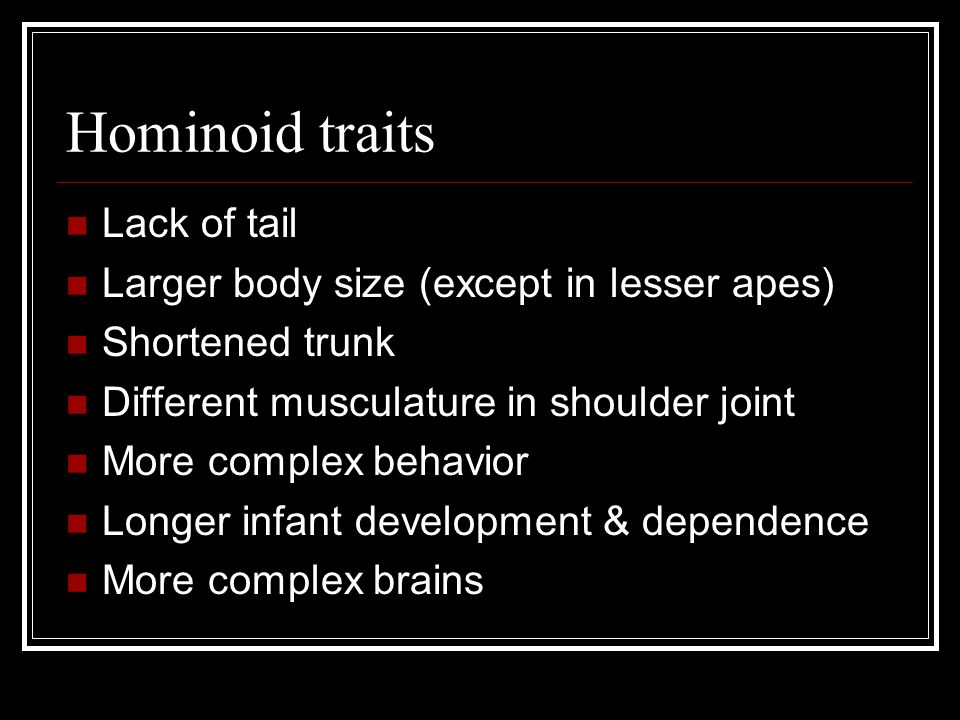 Hominoid traits Lack of tail Larger body size (except in lesser apes) Shortened trunk Different musculature in shoulder joint More complex behavior Longer infant development & dependence More complex brains