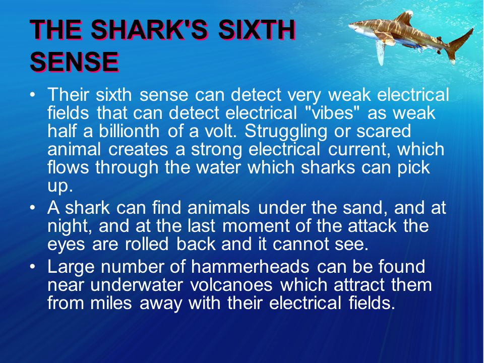 THE SHARK S SIXTH SENSE Their sixth sense can detect very weak electrical fields that can detect electrical vibes as weak half a billionth of a volt.