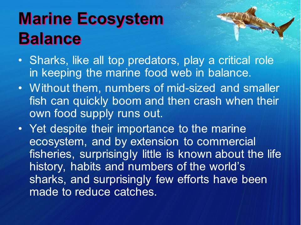 Marine Ecosystem Balance Sharks, like all top predators, play a critical role in keeping the marine food web in balance.