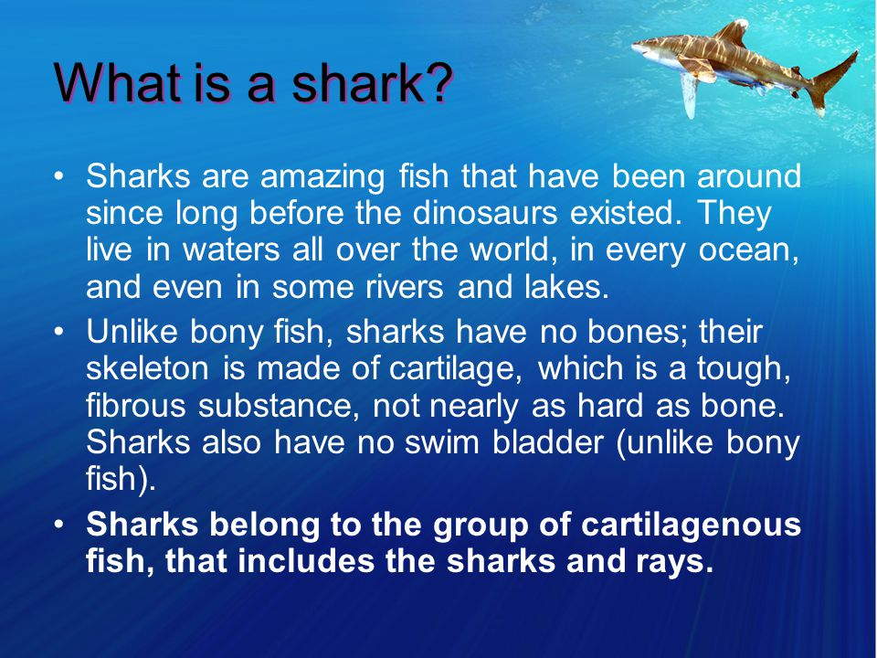 What is a shark.