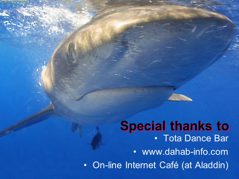 Special thanks to Tota Dance Bar www.dahab-info.com On-line Internet Café (at Aladdin)