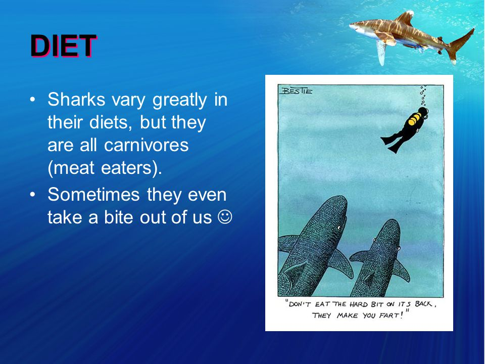 DIET Sharks vary greatly in their diets, but they are all carnivores (meat eaters).