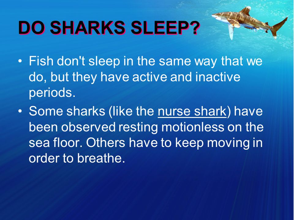 DO SHARKS SLEEP.