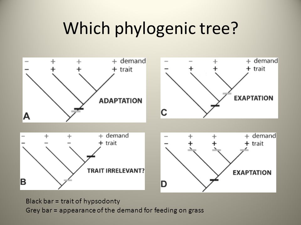 Which phylogenic tree? Black bar = trait of hypsodonty Grey bar = appearance of the demand for feeding on grass