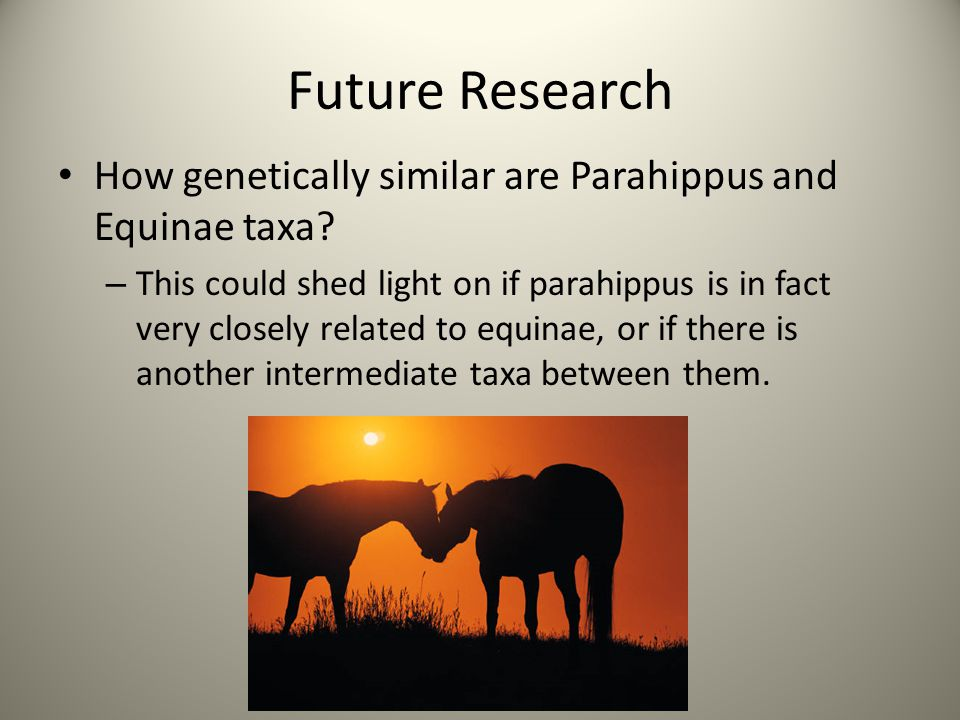 Future Research How genetically similar are Parahippus and Equinae taxa? – This could shed light on if parahippus is in fact very closely related to e