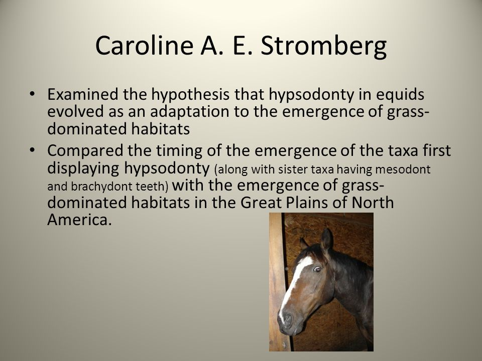 Caroline A. E. Stromberg Examined the hypothesis that hypsodonty in equids evolved as an adaptation to the emergence of grass- dominated habitats Comp