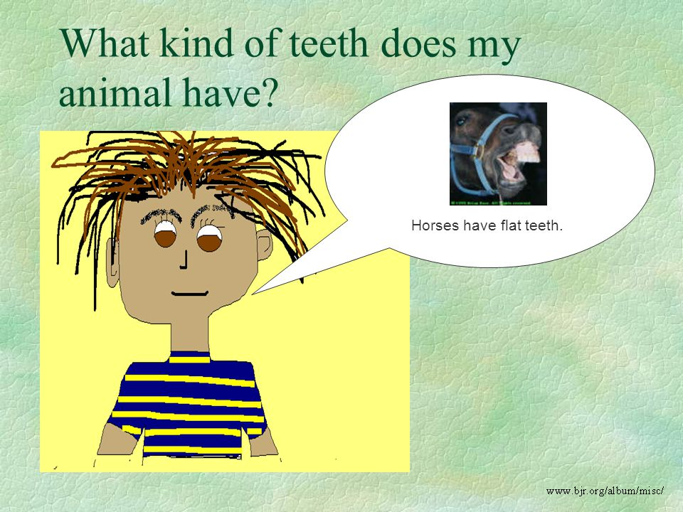 Horses have flat teeth. What kind of teeth does my animal have?
