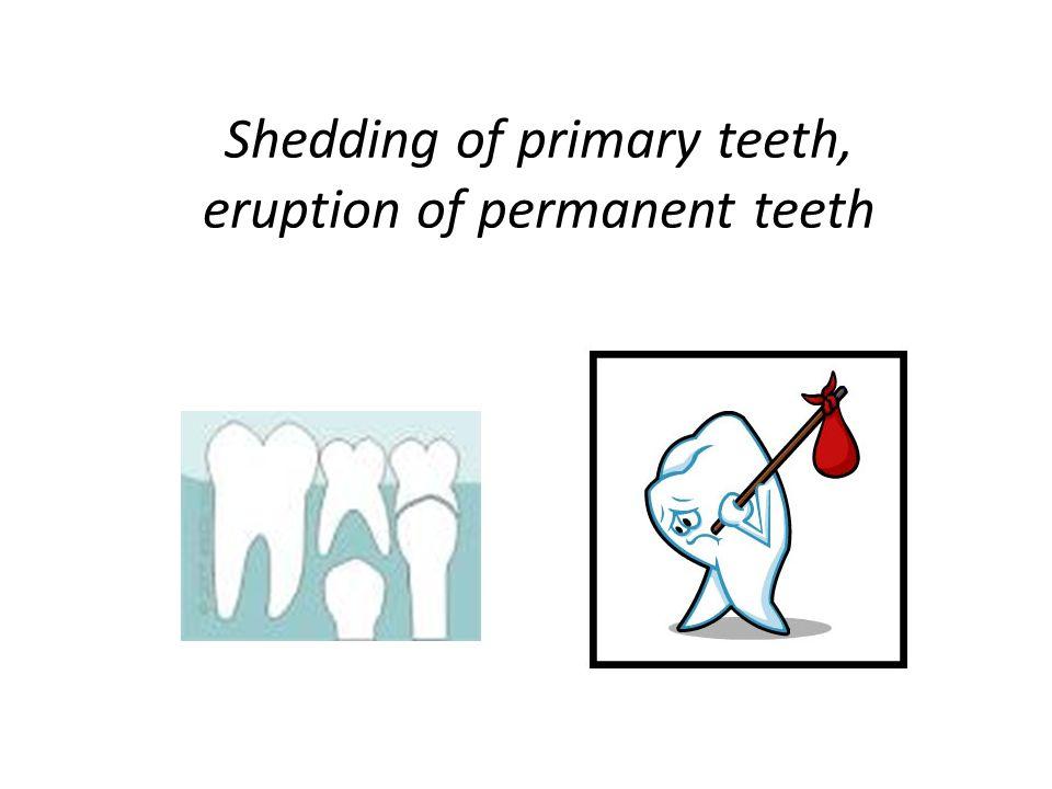 Shedding of primary teeth, eruption of permanent teeth
